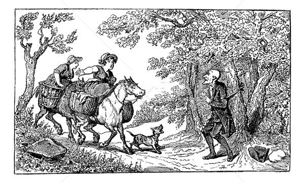 Dr touw twee paardenrug dorp vrouwen Stockfoto © Morphart