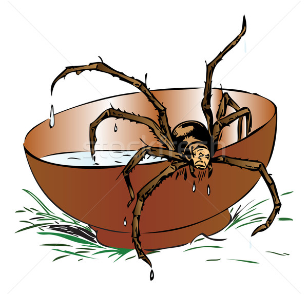 Wet spider coming out of a bowl Stock photo © Morphart