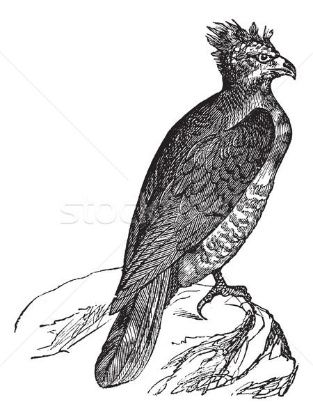 Harpy (thrasaetus harpyia) vintage engraving Stock photo © Morphart