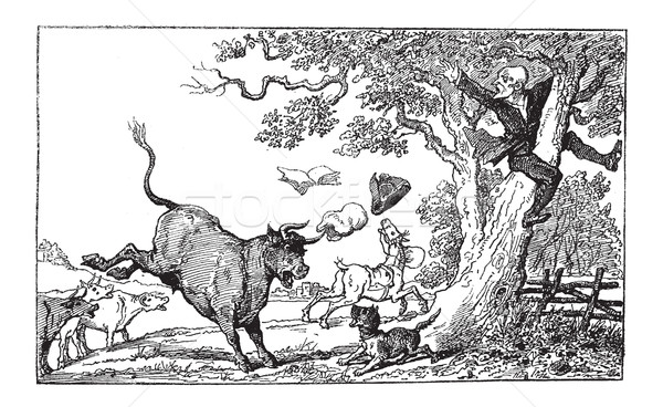 Doctor Syntax Being Chased by a Bull, vintage engraving Stock photo © Morphart
