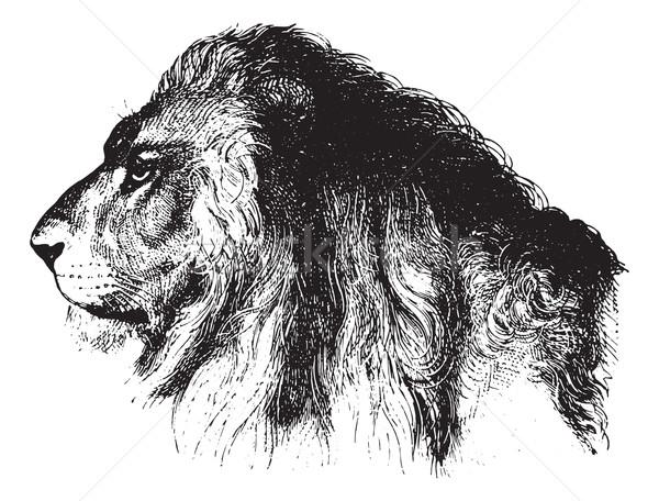 Löwen Jahrgang Gravur Gesicht graviert Illustration Stock foto © Morphart