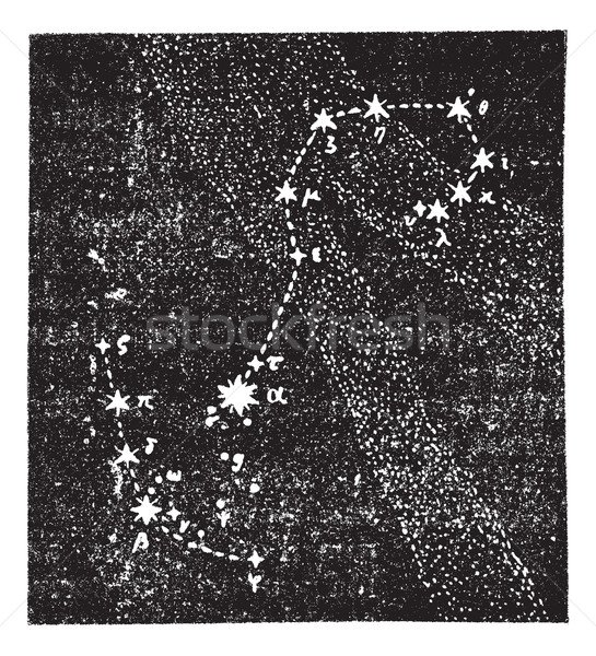 Scorpion constellation vintage gravure gravé illustration Photo stock © Morphart