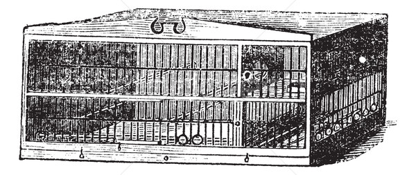 The compartment of cage vintage engraving Stock photo © Morphart