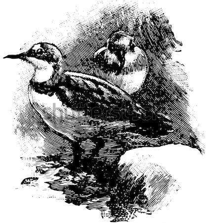 Kecskék agancs klasszikus vésés gravírozott illusztráció Stock fotó © Morphart