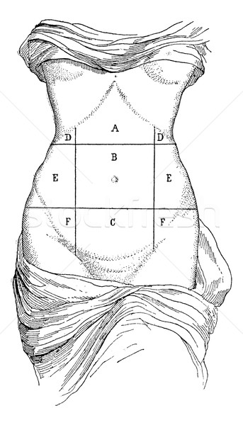 Abdomen and its subdivisions, vintage engraving. Stock photo © Morphart