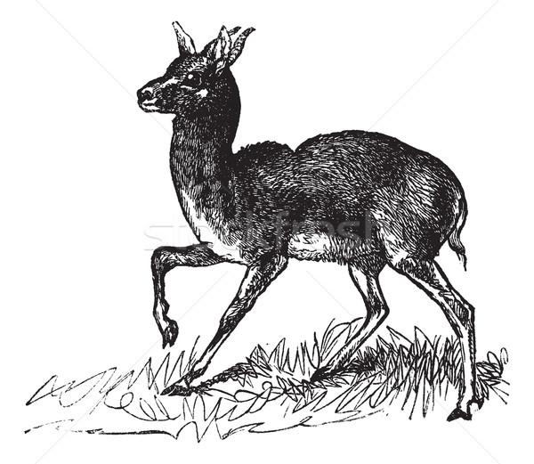 Dorcas Gazelle or Gazella dorcas vintage engraving  Stock photo © Morphart