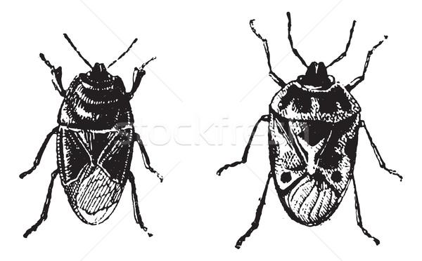 Black bug, Orne Bug, vintage engraving. Stock photo © Morphart