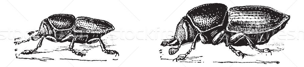 カブトムシ ヴィンテージ 彫刻 刻ま 実例 辞書 ストックフォト © Morphart