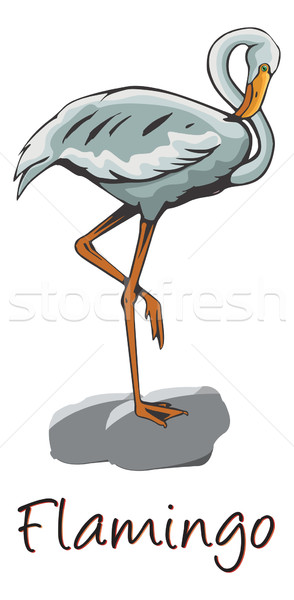 Flamingo, Color Illustration Stock photo © Morphart