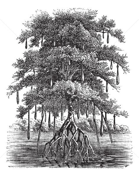 Stok fotoğraf: Bağbozumu · oyma · bataklık · orman · eski · oyulmuş