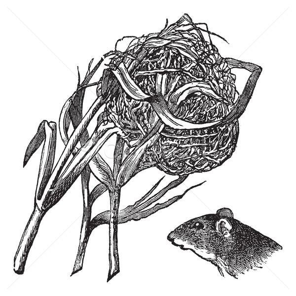 Nido testa raccolto mouse vintage Foto d'archivio © Morphart