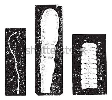 Vintage gegraveerd encyclopedie zwarte tekening Stockfoto © Morphart