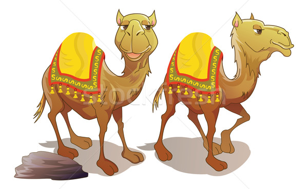 Two Camels, illustration Stock photo © Morphart