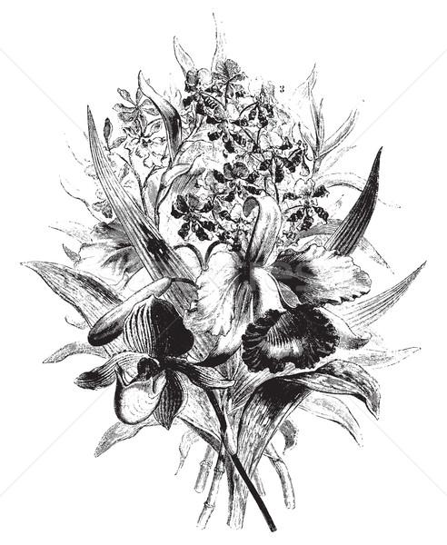 Orkide bağbozumu oyma oyulmuş örnek tur Stok fotoğraf © Morphart