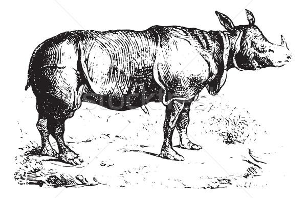 Nosorożec vintage lasu wyryty ilustracja Zdjęcia stock © Morphart