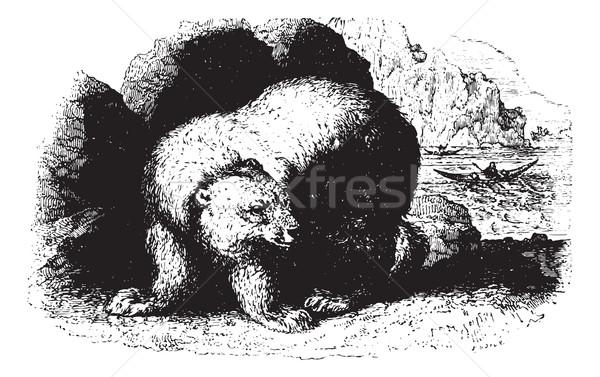 Bear, vintaqe engraving. Stock photo © Morphart