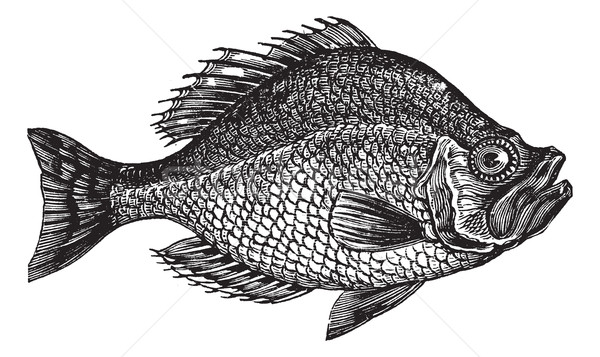 Kő basszus hal klasszikus vésés öreg Stock fotó © Morphart