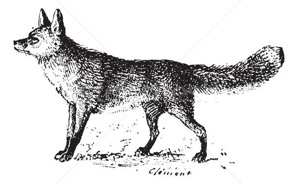Fox Vintage иллюстрация словарь Сток-фото © Morphart