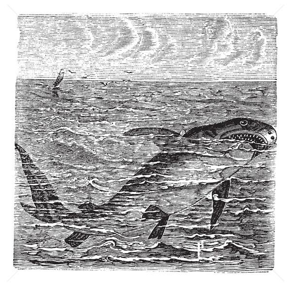 Muhteşem beyaz köpekbalığı bağbozumu oyma ölüm Stok fotoğraf © Morphart