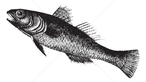 Siyah Nijer balık bağbozumu oyma oyulmuş Stok fotoğraf © Morphart