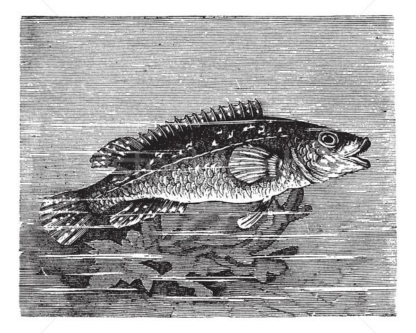 Mar vintage edad grabado ilustración Foto stock © Morphart