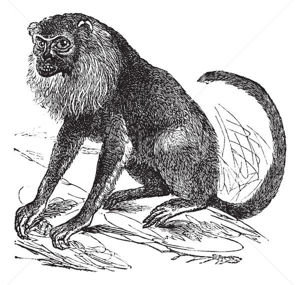 Vintage gravé illustration encyclopédie noir singe Photo stock © Morphart