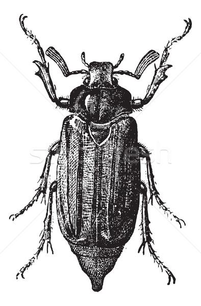 Füge 10 cserebogár rovar klasszikus vésés Stock fotó © Morphart
