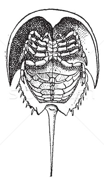 馬蹄 カニ ヴィンテージ 彫刻 刻ま 実例 ストックフォト © Morphart