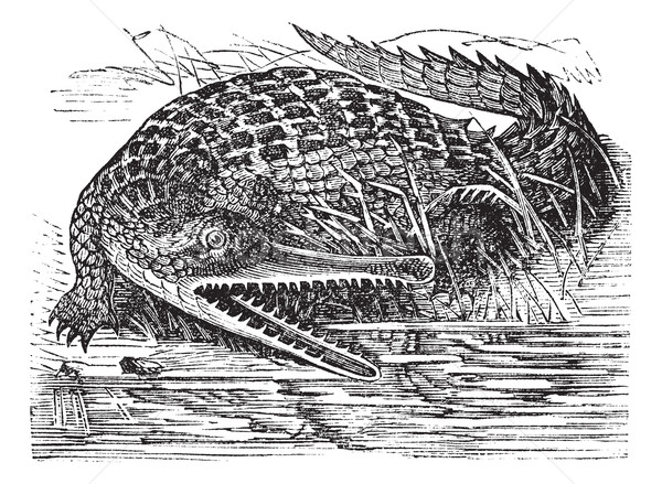 Gharial or Gavialis gangeticus vintage engraving Stock photo © Morphart