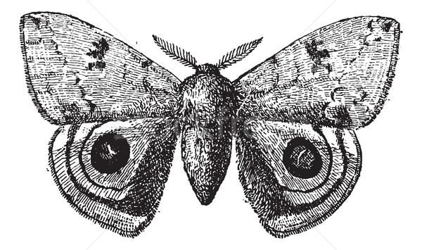 ヨーロッパの 孔雀 蝶 ヴィンテージ 彫刻 刻ま ストックフォト © Morphart