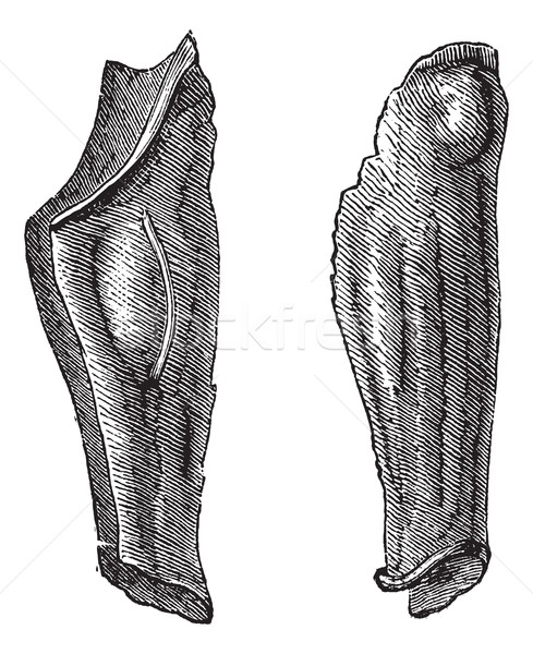 Armor leg of tin or Flexible greaves vintage engraving Stock photo © Morphart