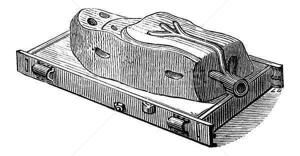 Mould, vintage engraving Stock photo © Morphart