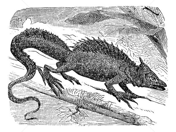 Basilisk or Basiliscus mitratus vintage engraving. Stock photo © Morphart