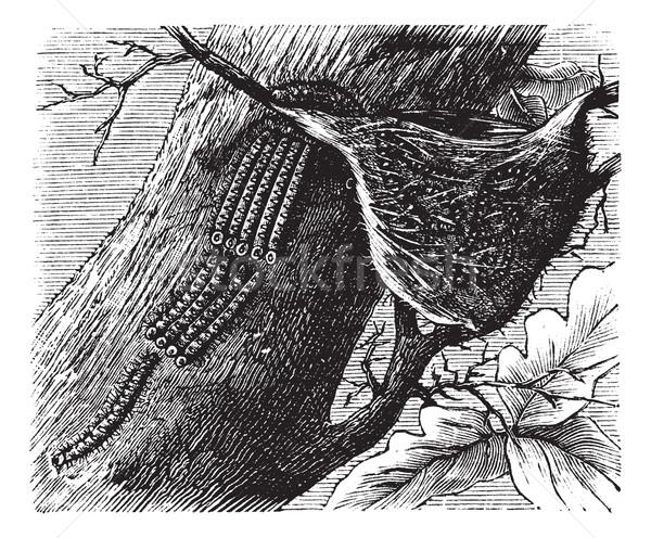 Lagarta vintage velho gravado ilustração Foto stock © Morphart