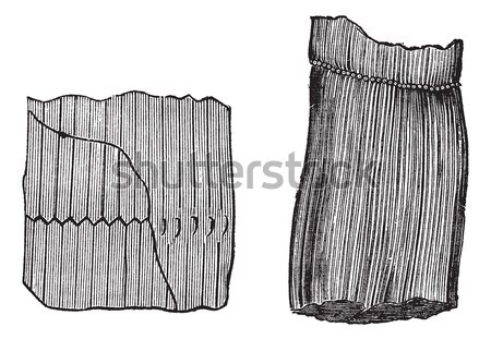 Structure of the Small Intestine, vintage engraving Stock photo © Morphart
