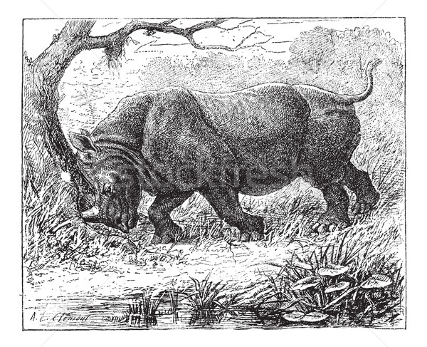 Rhinoceros, vintage engraving. Stock photo © Morphart