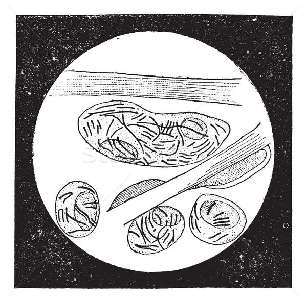 Mycobacterium leprae, vintage engraving Stock photo © Morphart