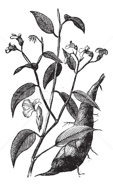 Bağbozumu oyma itaat bitki eski oyulmuş Stok fotoğraf © Morphart