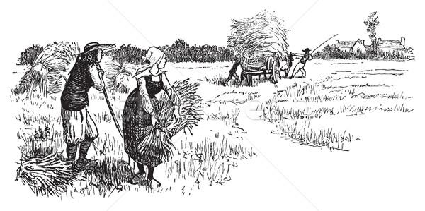 Harvest in Brittany, vintage engraving. Stock photo © Morphart