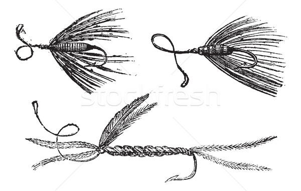 Fig. 49. Palmer. Fig. 50. Ant wing in August. Fig. 51. little Pe Stock photo © Morphart