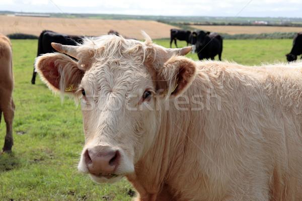 Stock photo: white horns