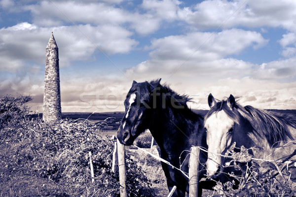 pair of wild Irish horses and ancient round tower Stock photo © morrbyte
