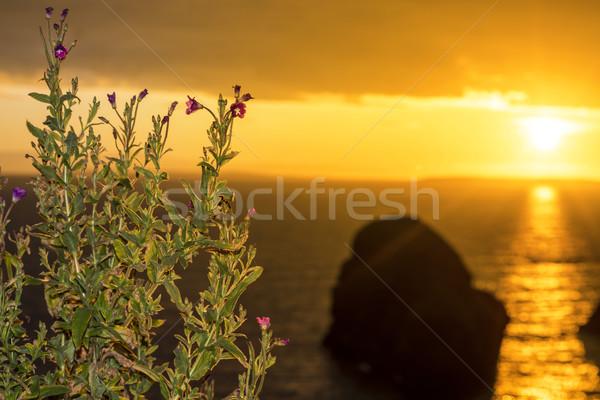 virgin rock and wild flowers sunset Stock photo © morrbyte