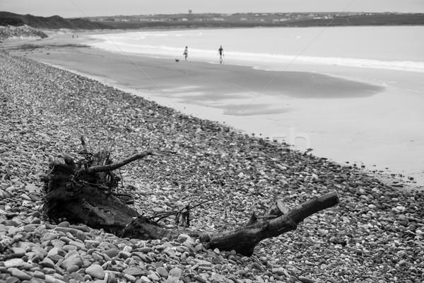Troncos praia ligações campo de golfe madeira Foto stock © morrbyte