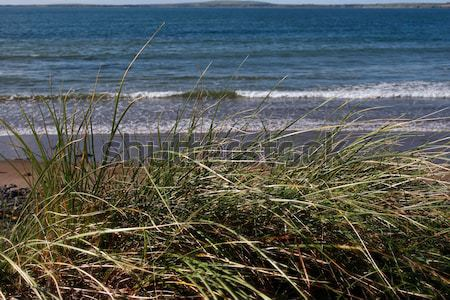 kerry Ireland beal dune grass Stock photo © morrbyte
