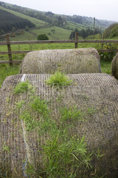 old round bales in lush irish countryside Stock photo © morrbyte