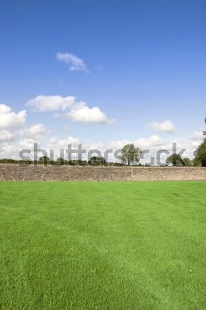 green grass flields with stone wall Stock photo © morrbyte