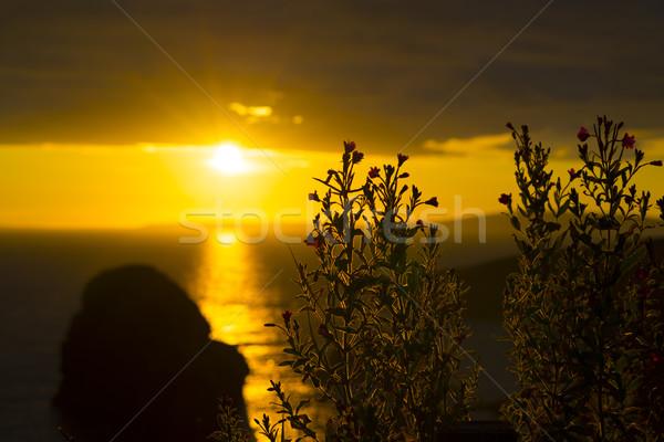 wild atlantic way sunset flowers Stock photo © morrbyte