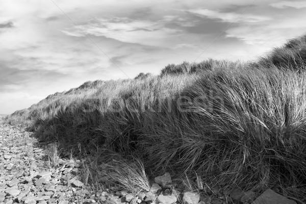 Drámai tengerpart magas dűne fű Írország Stock fotó © morrbyte