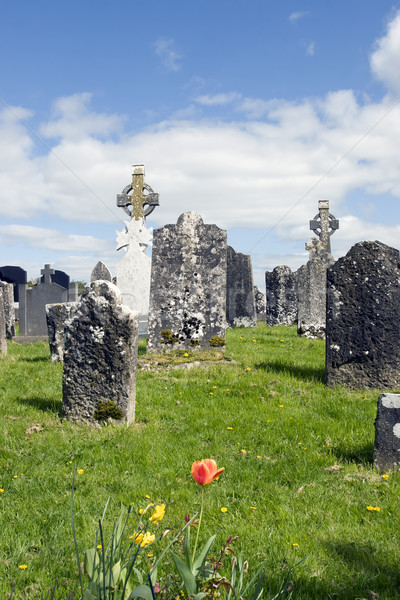 ancient Celtic graveyard with flowers Stock photo © morrbyte